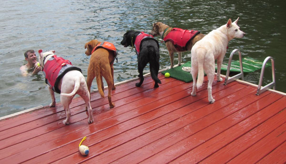 Five dock dogs