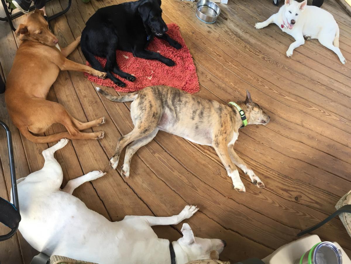 Five Pups