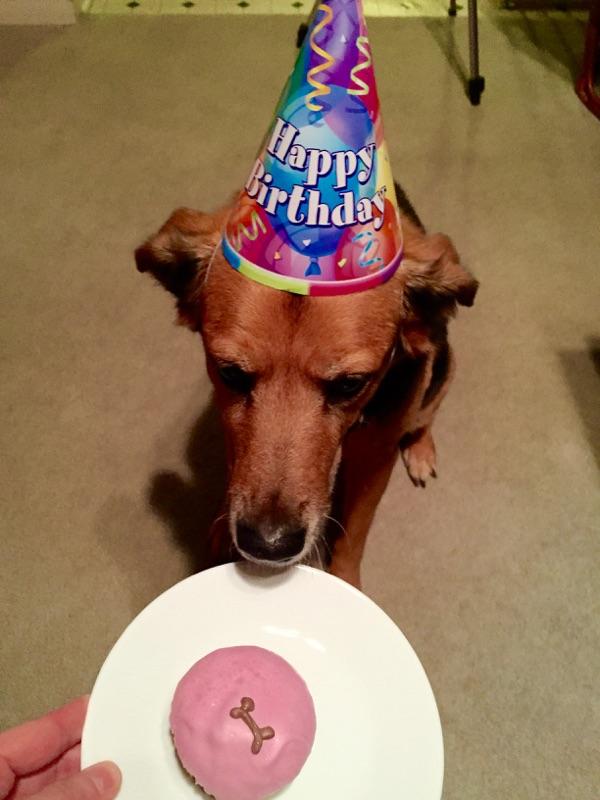 Molly's 14th birthday