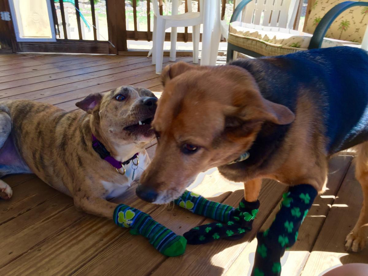 Shamrock Pups