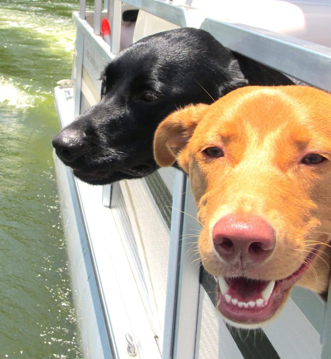 More dogs on a boat