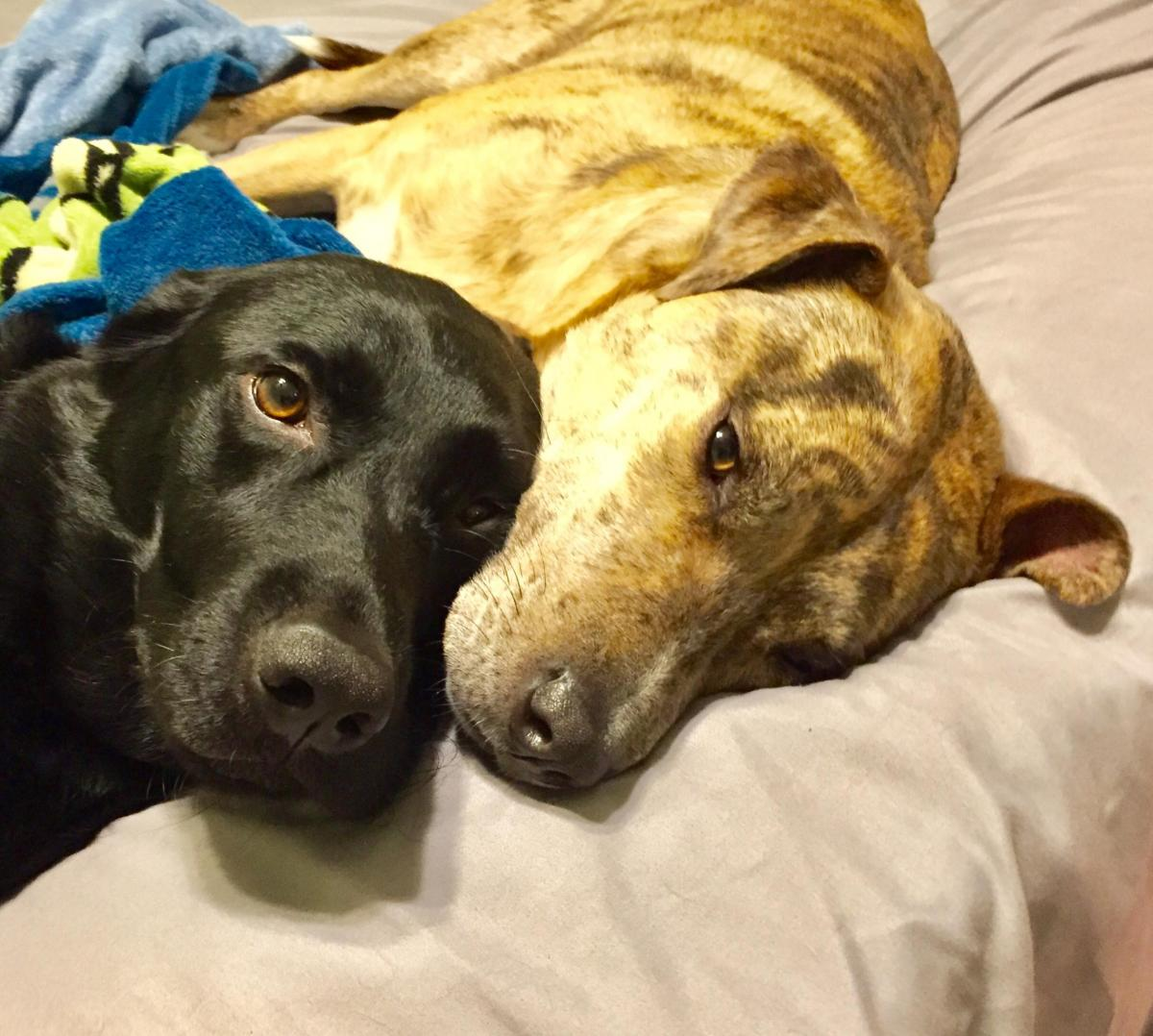 Bear and Kali snuggling